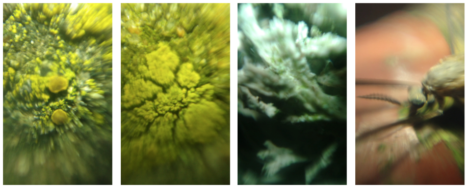 Macro photos of: Lichen, more lichen, even more lichen, and some insects face